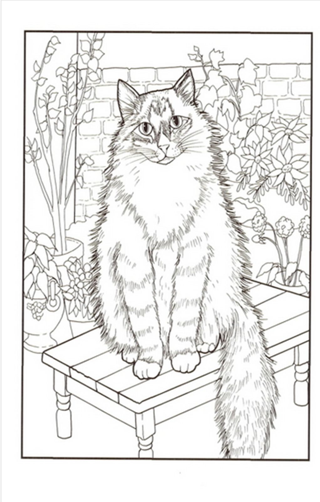Cats Coloring Book by Mimi Vang Olsen for Adult Anti