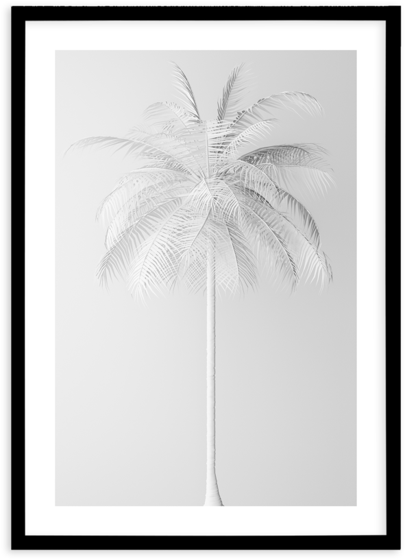 Hd White Palm On Grey Attalea Speciosa Free Unlimited Download 1402107 Sc Hd White Palm On Grey Palm Tree Vector Palm Tree Silhouette Palm Tree Png