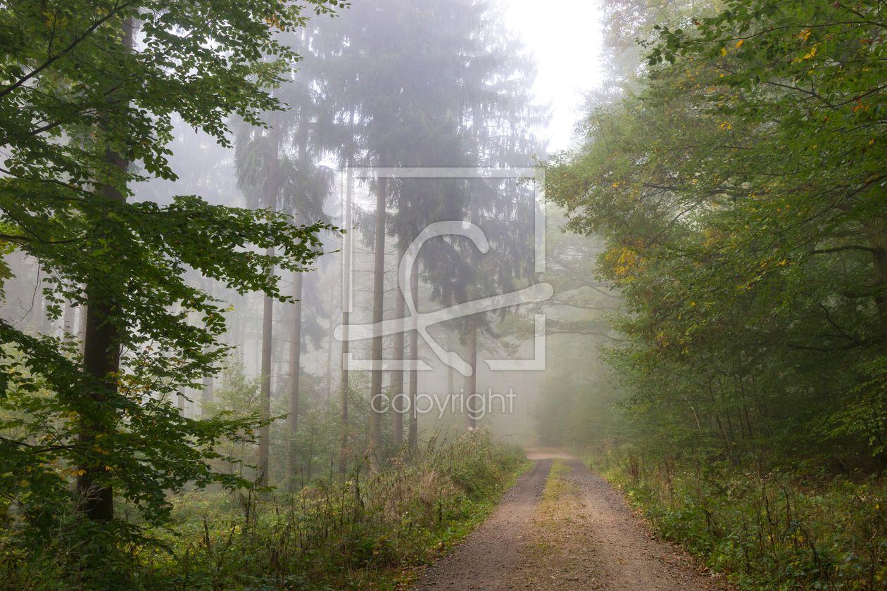Durch den Nebel im Wald -  auf http://ronni-shop.fineartprint.de