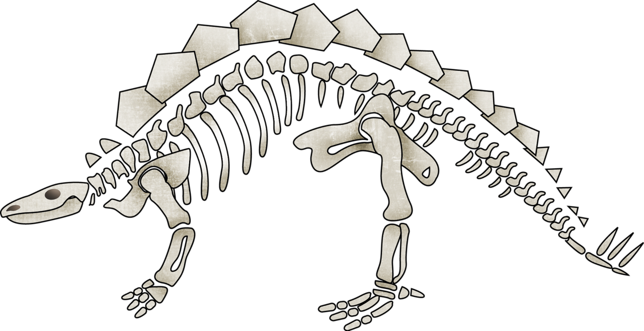 Fayette Urockmw Dino Skeleton1 Png