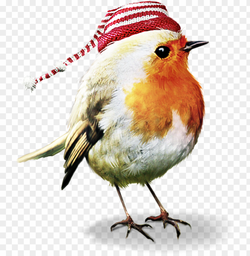 Bird Birds Robin Winter Christmas Terrieasterly Psp Tubes Animals Png Image With Transparent Background Png Free Png Images Bird Cute Birds Animal Clipart