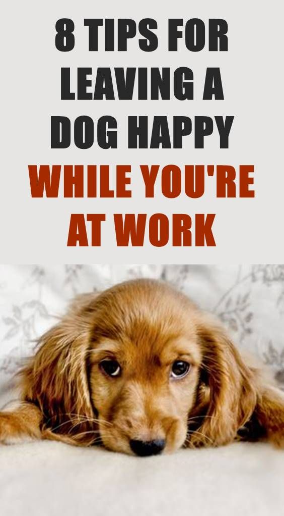 While It Would Be Great To Spend All Day With Our Dogs Most Of Us