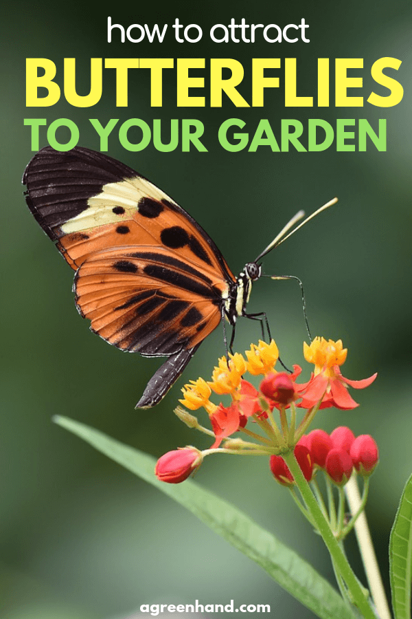How To Attract Butterflies To Your Yard Or Garden ...