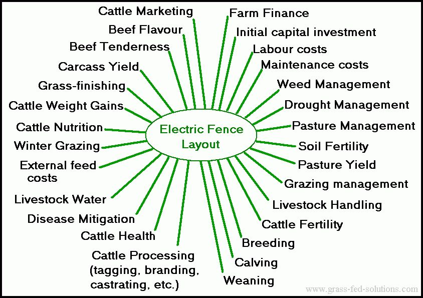 Business plan raising beef cattle objective data entry resume