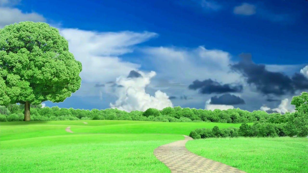 Hd 1080p Nature Grass Tree Scenery Video Royalty Free Landscape Video Greenscreen Wedding Videos Wedding Frames