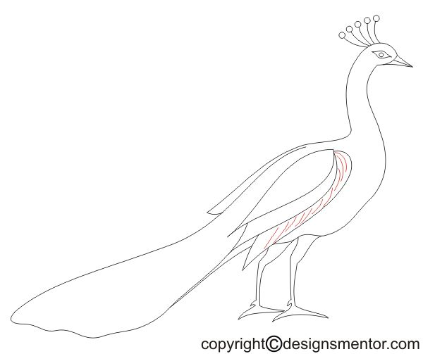 How To Draw A Peacock Simple And Step By Step Method To Draw