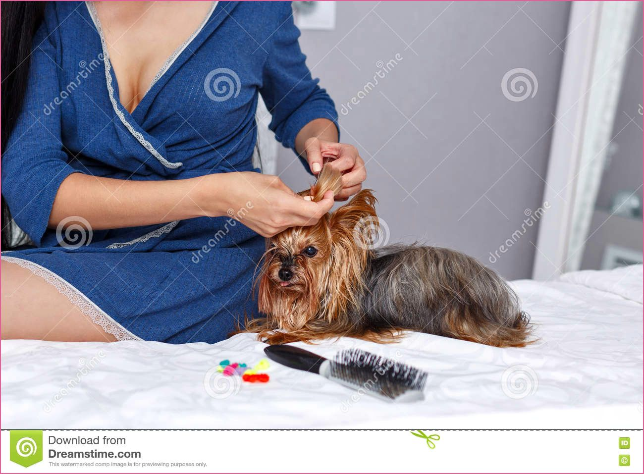 Biewer Yorkshire Terrier Rassebeschreibung In 2020 Yorkshire Terrier Terrier Yorkshire
