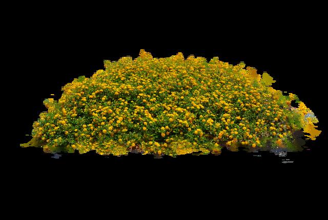 10 plantas flores libres png im genes en for Plantas y arbustos de exterior