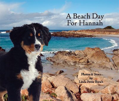 "In Hannah the mountain dog's second book, ""A BEACH DAY FOR HANNAH""  the bouncy pup tests the ocean waters, crafts sand creations on the beach, then investigates her talents navigating the surf with board and sail. 2014 International Book Award Finalist."