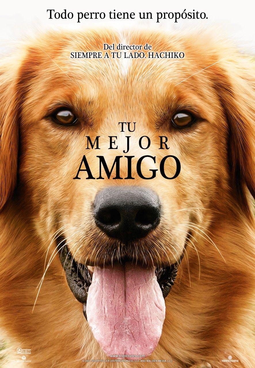 A Dog S Purpose Online Latino  Pelis