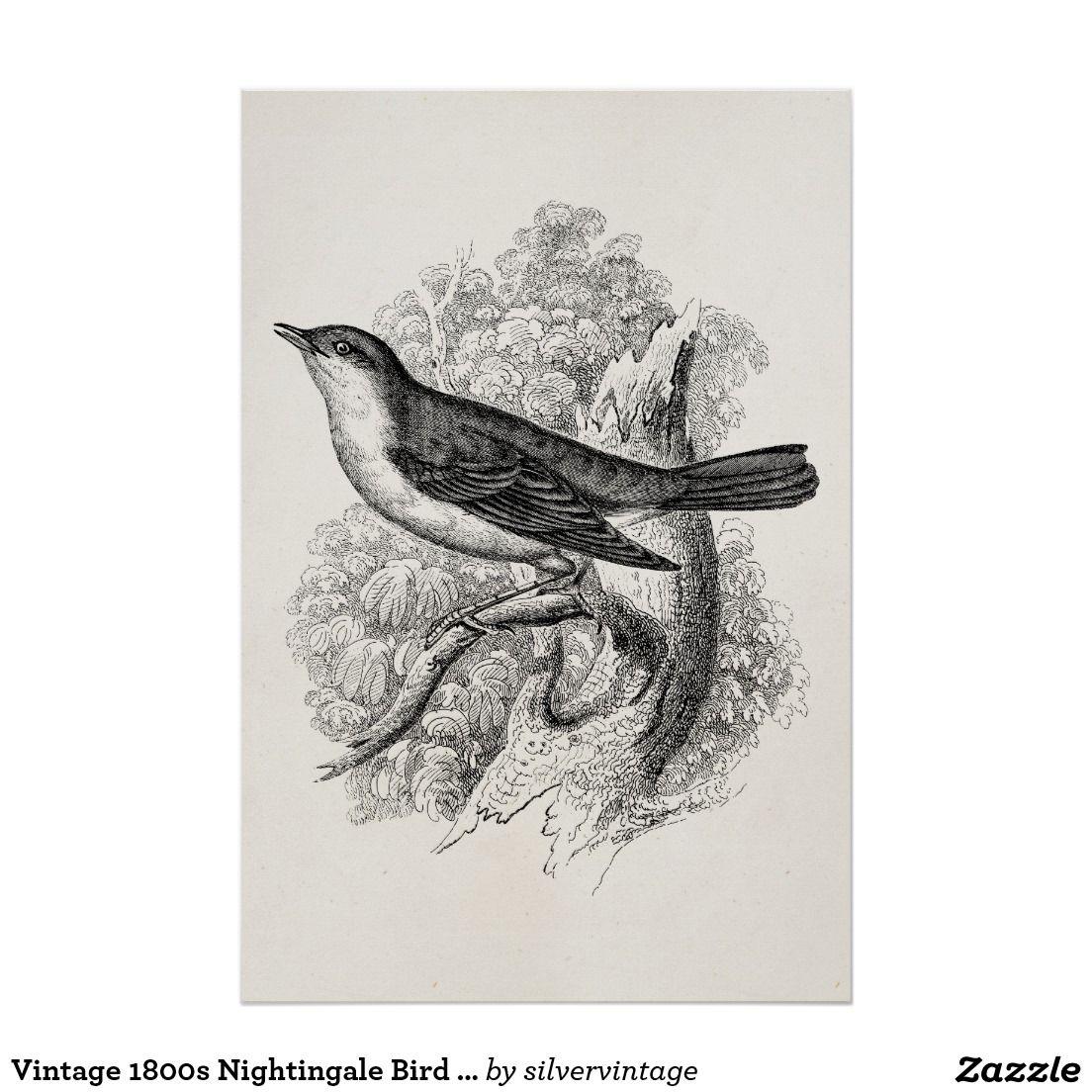 Vintage 1800s Nachtigall-Vogel-Illustrations-Vögel Poster | Vorlagen ...
