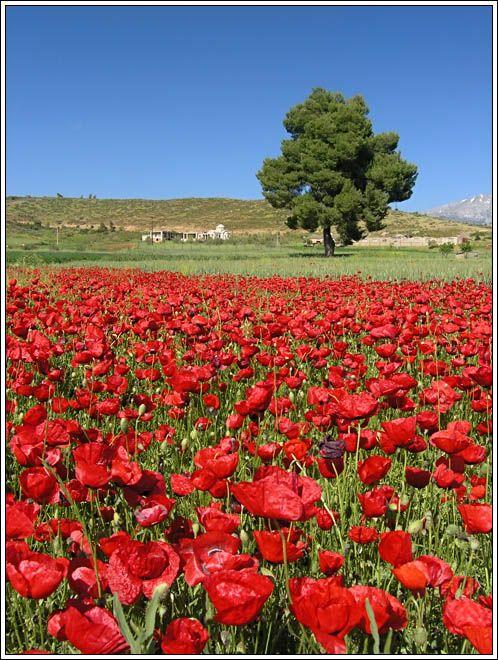 Evoia, Greece