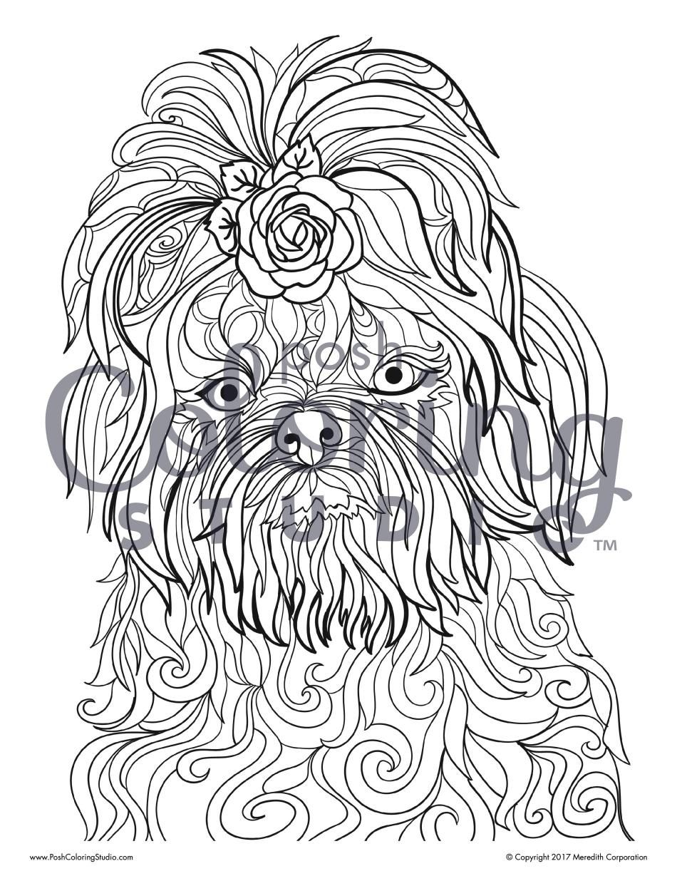 Swirly Shih Tzu Posh Coloring Studio Adult Coloring Pages Dog