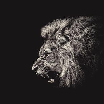 Blackhawks Gear On Twitter Lion Wallpaper Iphone Lion Wallpaper Lion Hd Wallpaper