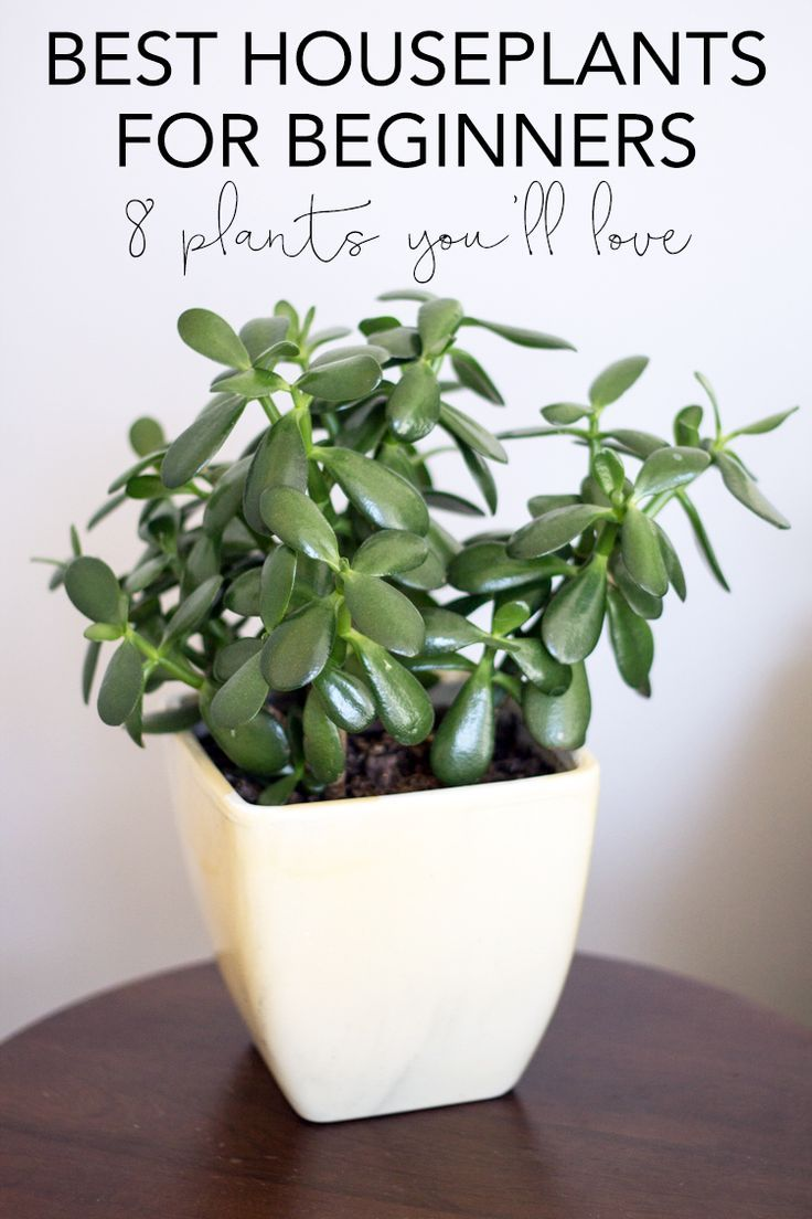 Common House Plants For Beginners Common House Plants 640 x 480
