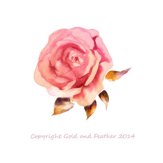 Rose Clipart Dusky Pink Peach Watercolour Flower by ...