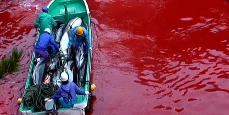 Sign Petition- Tell WAZA to stop participating in Dolphin massacre at Taiji Japan #swimwithdolphins #dolphins #japan #taiji
