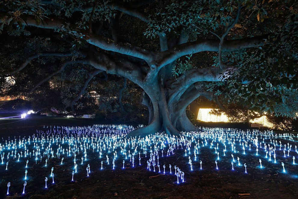 The garden's participation in this year's lights show