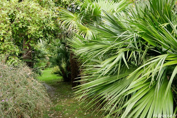 Le Jardin Botanique De Vauville Dans Le Cap Cotentin Jardin
