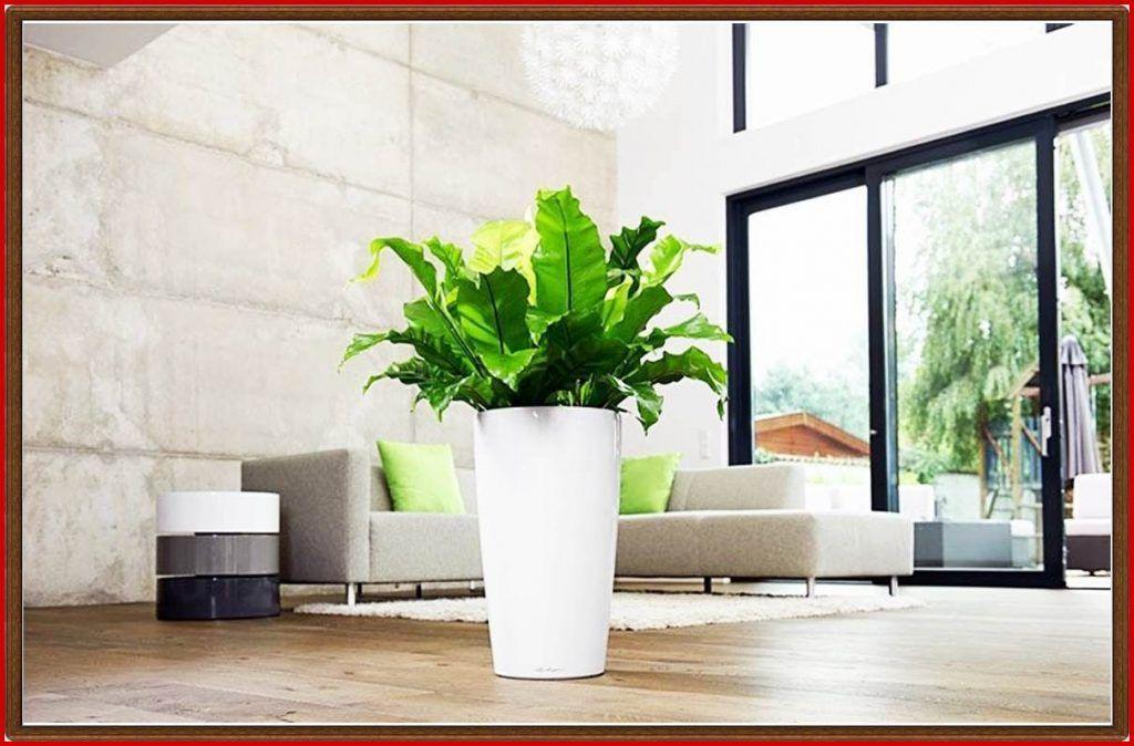 Dekorative Pflanzen Fürs Wohnzimmer 857508 Wandbilder Fürs Pflanzen ...