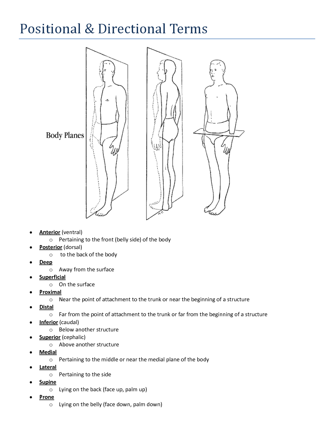 Anatomical Body Planes Worksheet