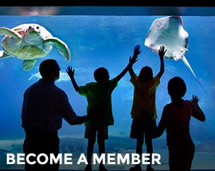 Memberships | Adventure Aquarium | Camden, NJ Regular membership (2 adult, no kid needed yet)