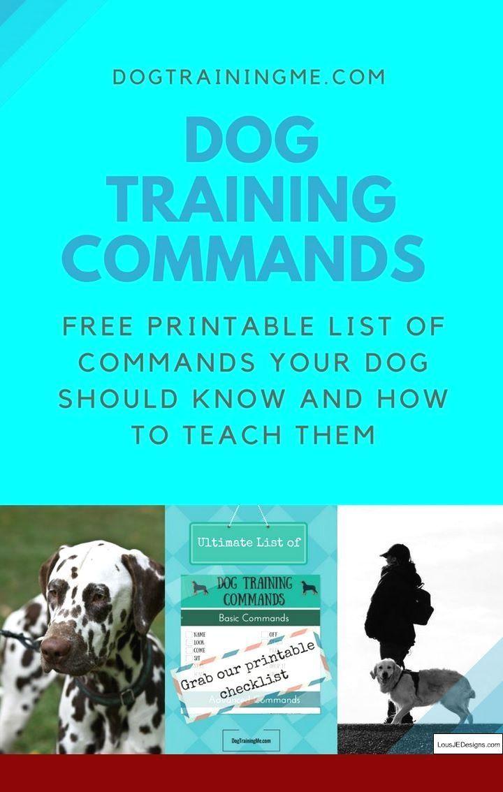 110 Guranteed Dog Training Tutorials Dogsorb Dogtraining