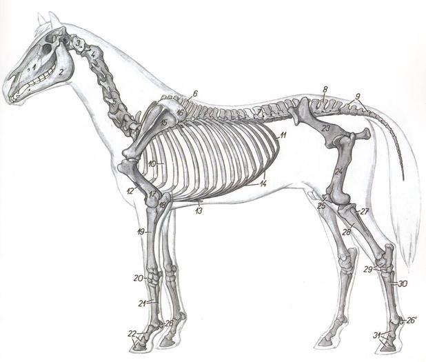 AnatomiaTopografica201 - IDENTIFICACION DE LAS REGIONES ANATOMICAS ...