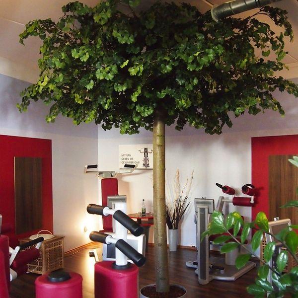 #Gynko Kunstbaum von #Bella Planta #Maßanfertigung #Foyer #Kauf-Mietoption #B1 Zertifikat #individuelle Kunstbaumgestaltung #