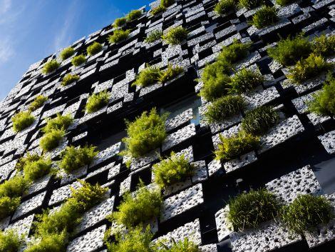 laud8-greencast3