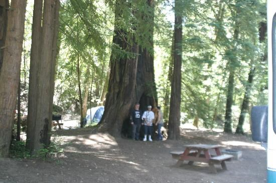 Redwoods River Resort & Campground (Leggett, CA