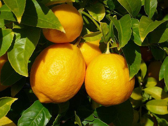 Lemons and its many uses