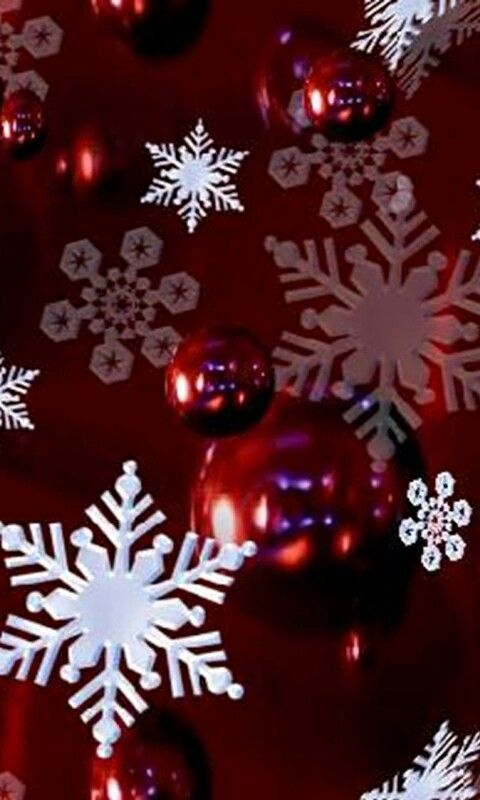Weihnachten Hd Bilder.Rosen In Rosa Roses In Pink Free Hd Wallpapers 4k Christmas