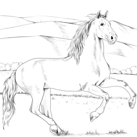 Pin Auf Pferde Ausmalbilder
