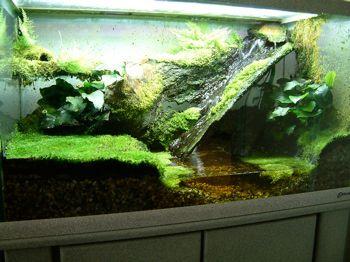 Caring For Frogs Arbor Frog Terrarium Reptile Terrarium Terrarium
