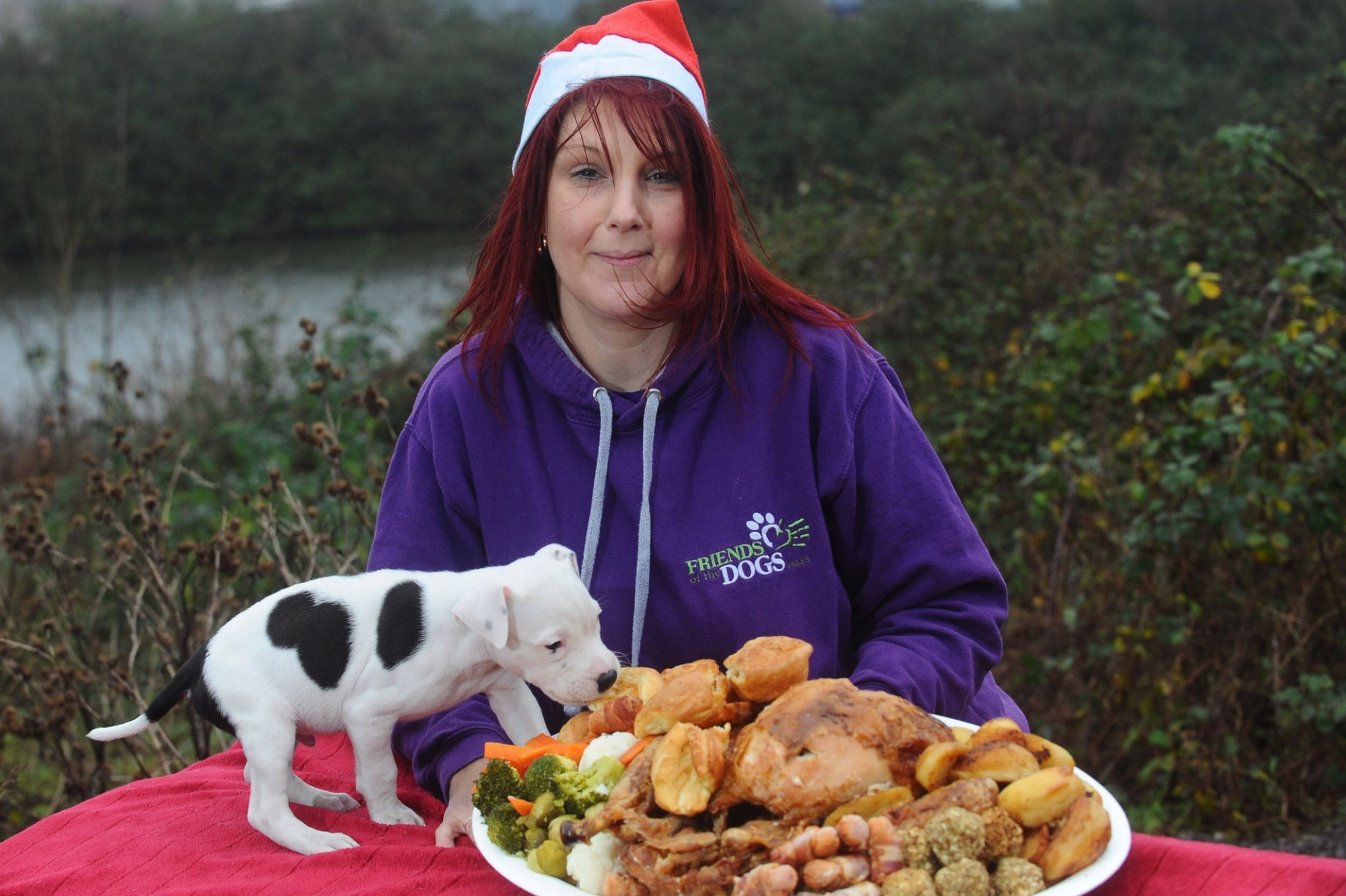 Cardiff S Stray Dogs Get Christmas Dinner With The Trimmings Christmas Dog Stray Dog Dogs