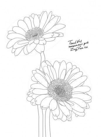 How To Draw Gerberas Step By Step 4 Flower Drawing Daisy Drawing Watercolor Flowers