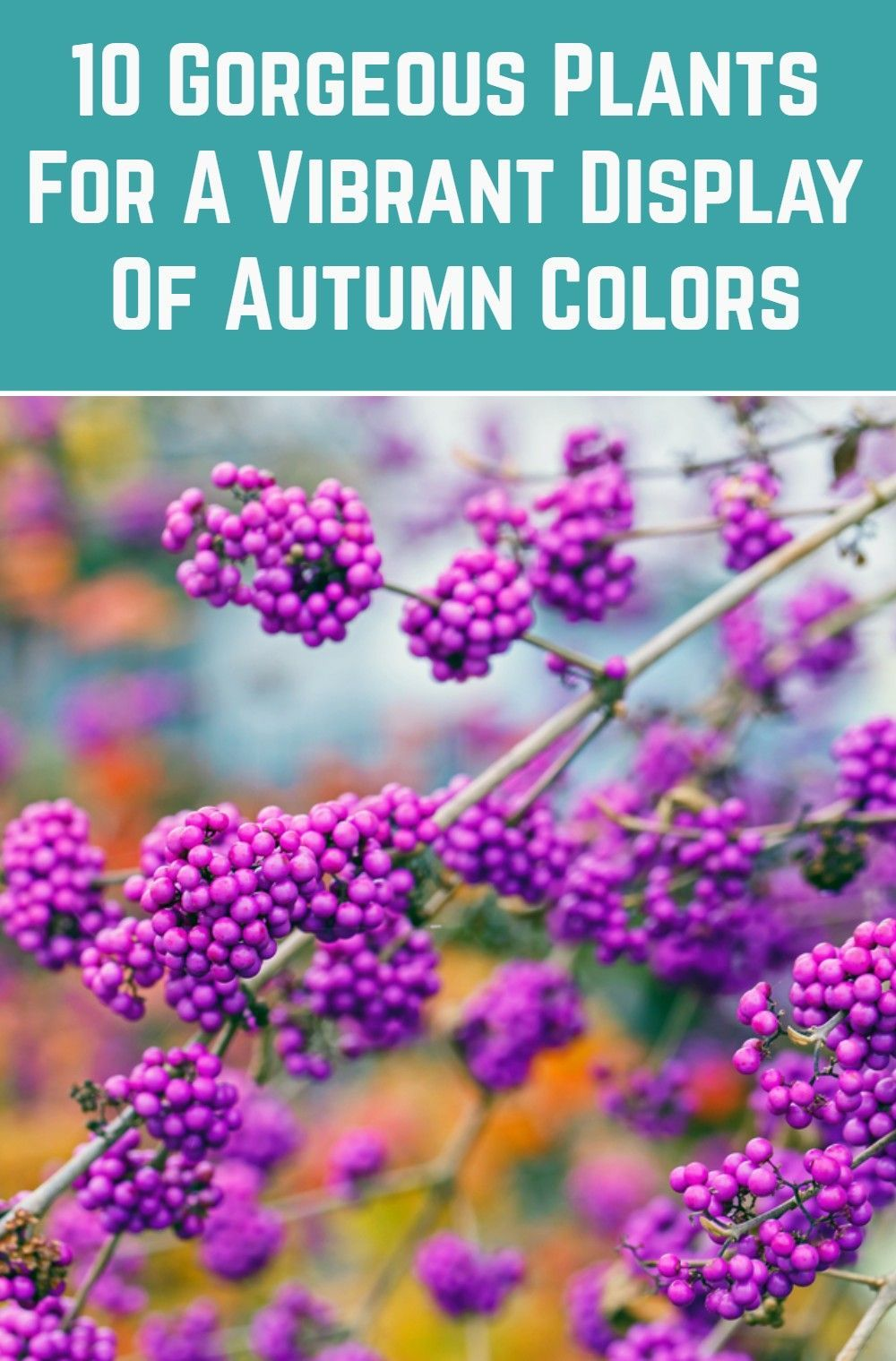 10 Gorgeous Plants For A Vibrant Display Of Autumn Colors In 2020 Plants Fall Plants Fall Colors