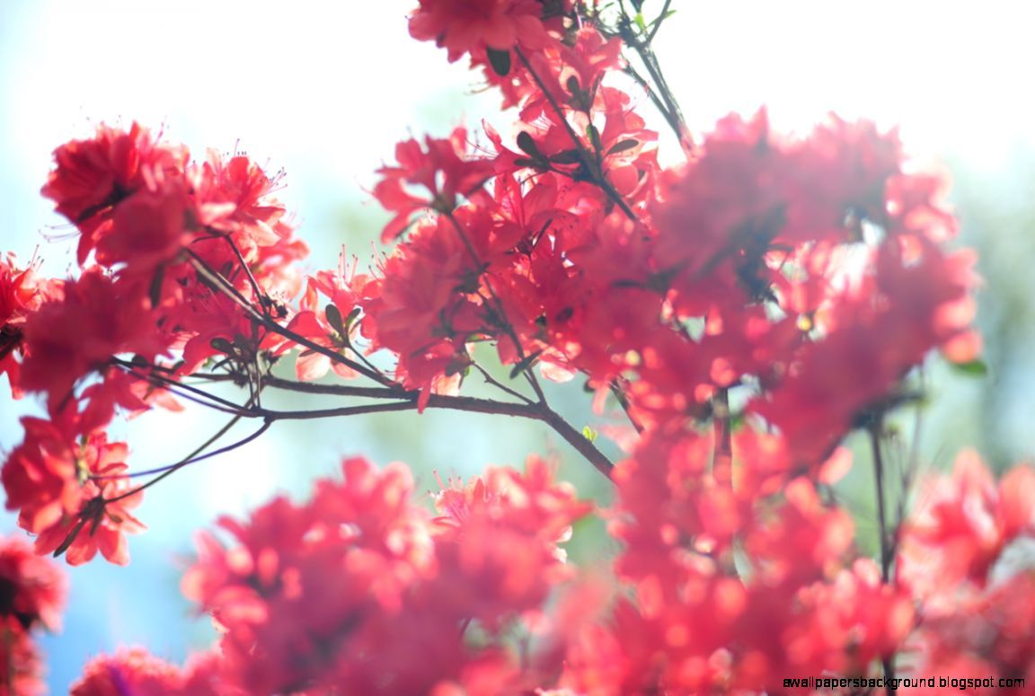 Hello Spring Tumblr Wallpapers Background Pretty