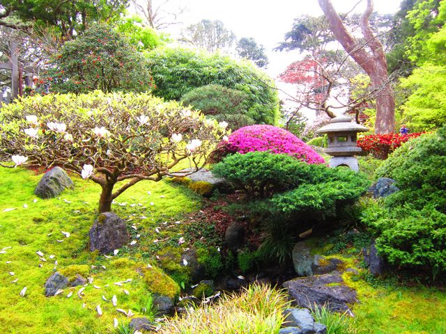 petit jardin japonais en pente les niwaki arbres du jardin japonais forme - Jardin Japonais En Pente