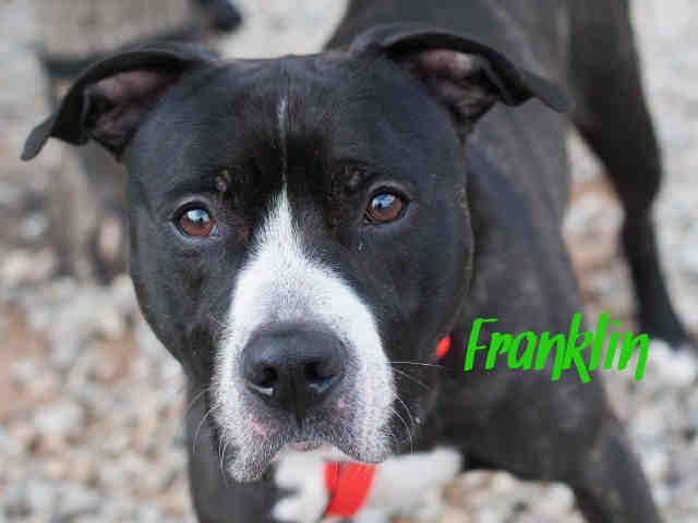 Frank Pittsburgh Pa Petharbor Com Animal Shelter Adopt A Pet