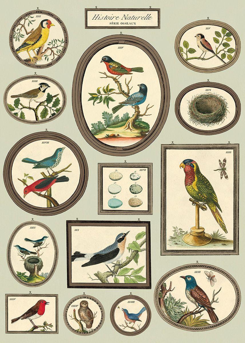Prachtige poster, die ook te gebruiken is als inpakpapier. Formaat 50 x 70 cm. #cavallini #poster #birds