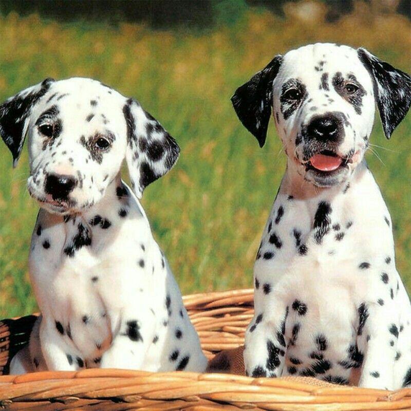 Pretty dogs