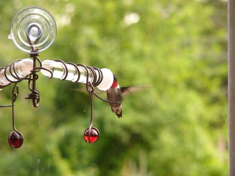 The Zen Birdfeeder Bird Feeders Humming Bird Feeders Zen