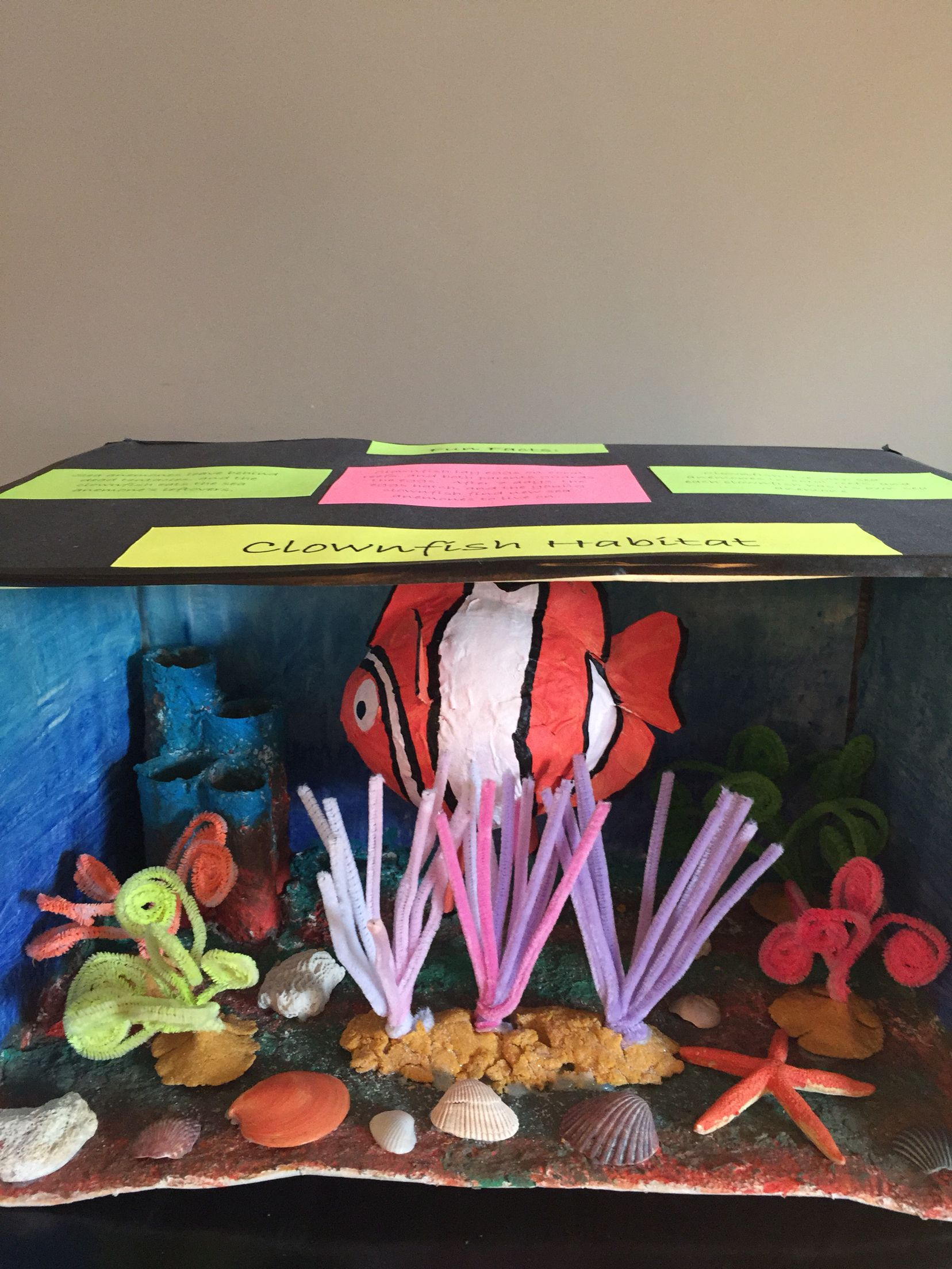 Clown Fish Habitat Diorama With Images
