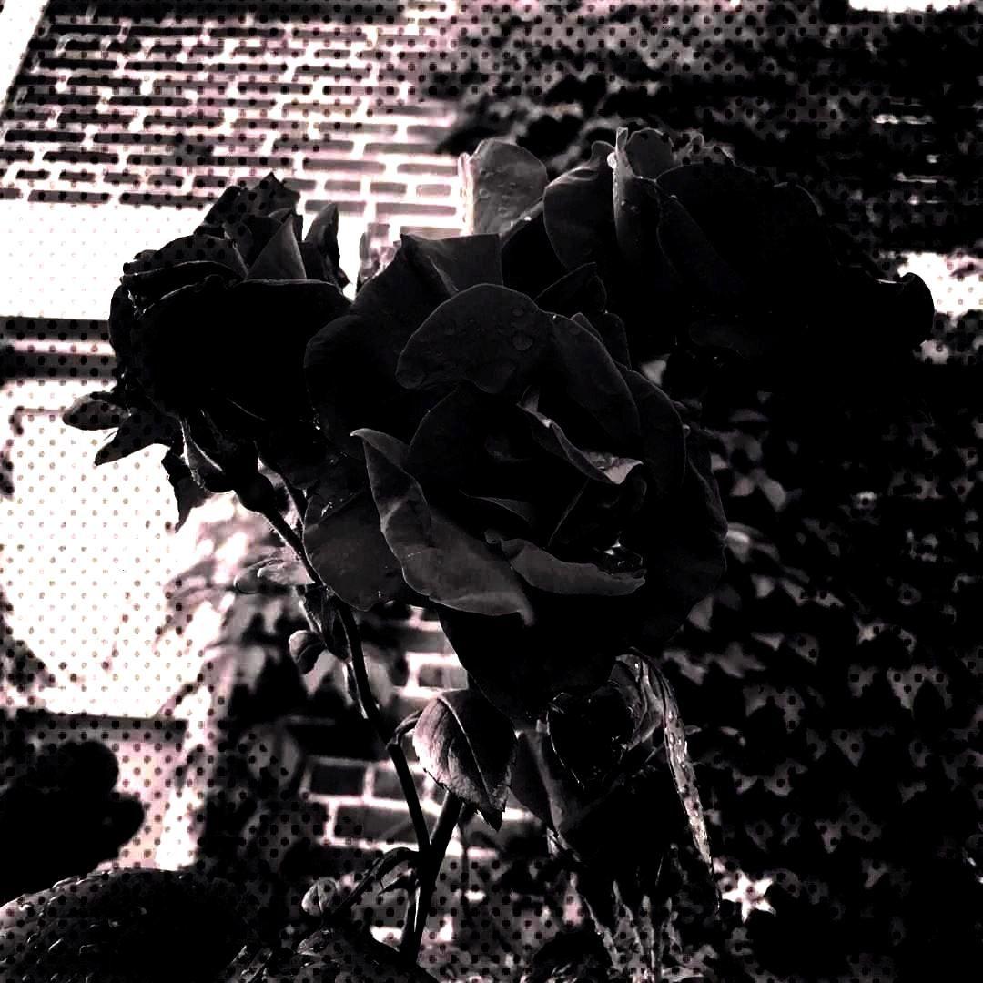 - - - - - -Bed of thorns - - - - - - -of thorns - - - - - - -Bed of...of thorns - - - - - - -Bed of
