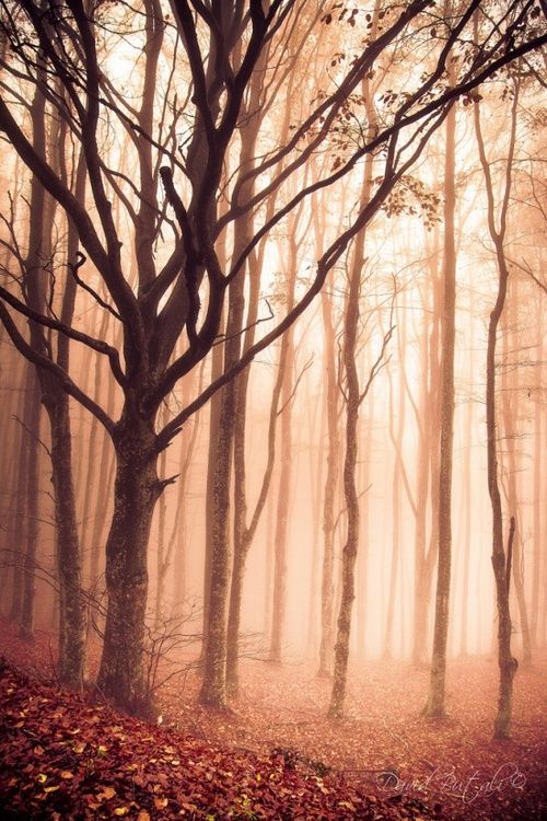 autumn scape