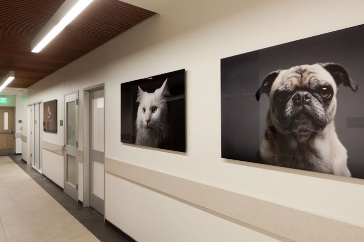 Veterinary Decor Wall Art Building A Vet Practice