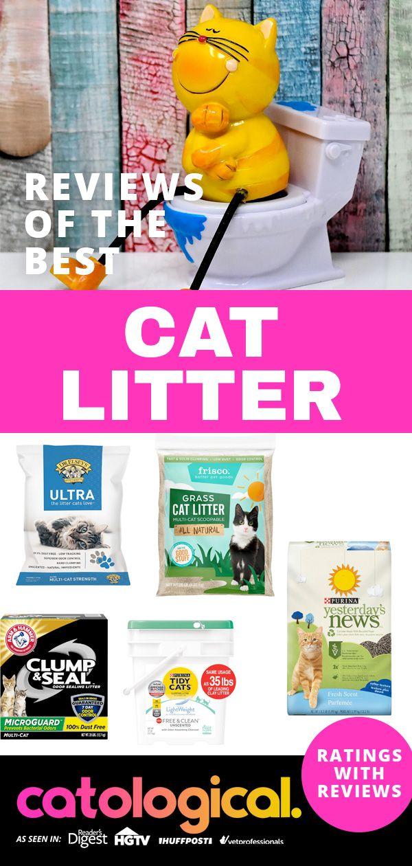 Get The Best Cat Litter On The Market Best cat litter
