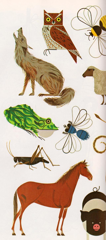 Charley Harper   ..graphic animals..   Pinterest   Ilustraciones ...
